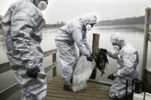 15. marts 2006: Fugleinfluenza rammer Danmark / Dags Dato